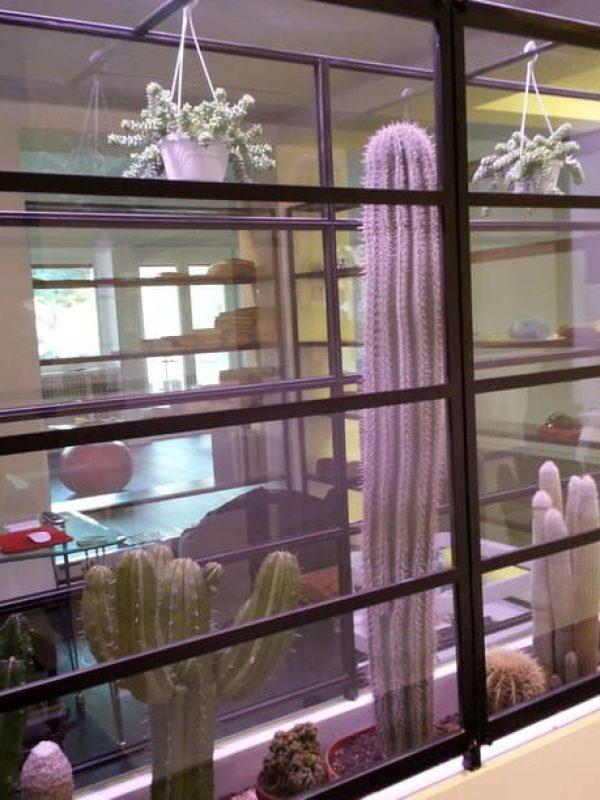 progetto serra interior design piante grasse lampade coltivazione indoor